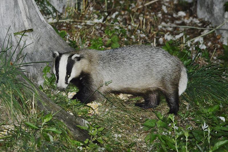 Franko Bajt - Jazbec